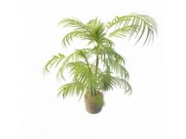 Palm plant in pots 3d model preview
