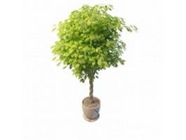 Indoor ornamental tree 3d model preview