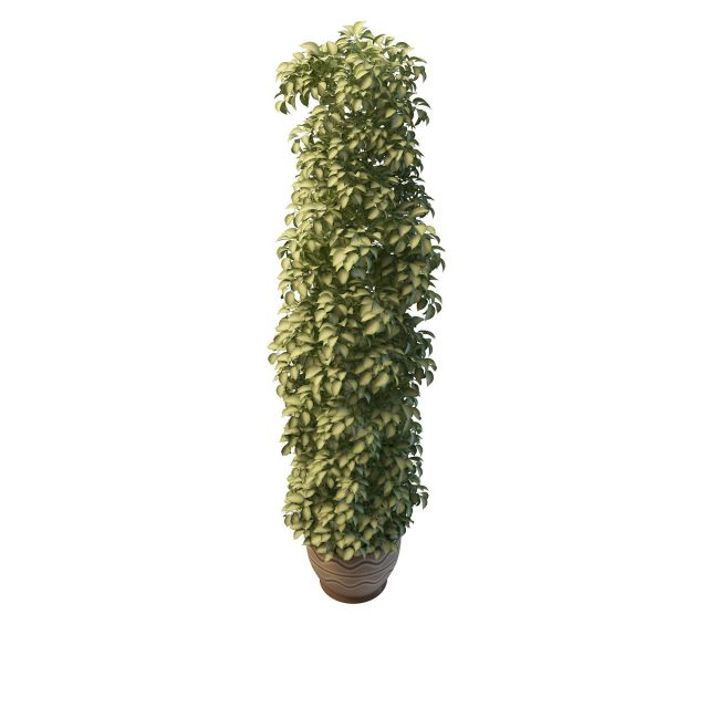 Tall variegated plants pot 3d rendering