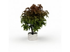 Ornamental potted plant 3d preview