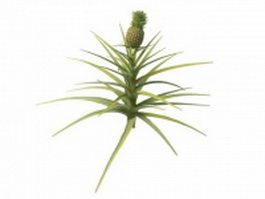 Pineapple plant 3d preview