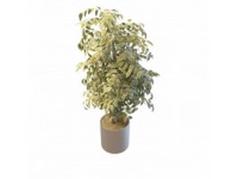 Variegated leaf house plant 3d preview