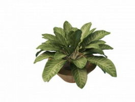 House plants with large leaves 3d model preview