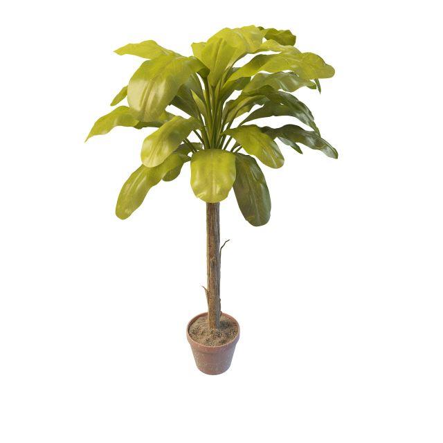 Indoor banana tree 3d rendering