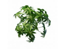 Digitate leaf plant 3d preview