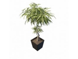 Pot lanceolate leaf tree 3d preview