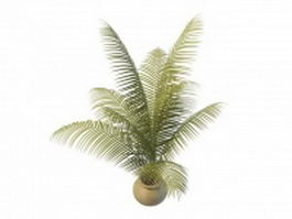 Indoor plants palm tree 3d preview