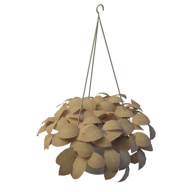 Hanging planter 3d rendering