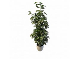 Potted lemon thyme 3d preview
