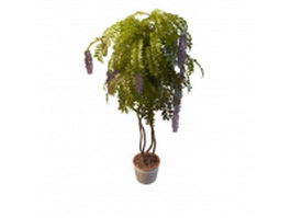 Wisteria potted plants 3d preview