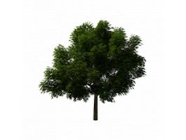 Linden tree 3d model preview