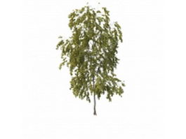 Small poplar tree 3d preview