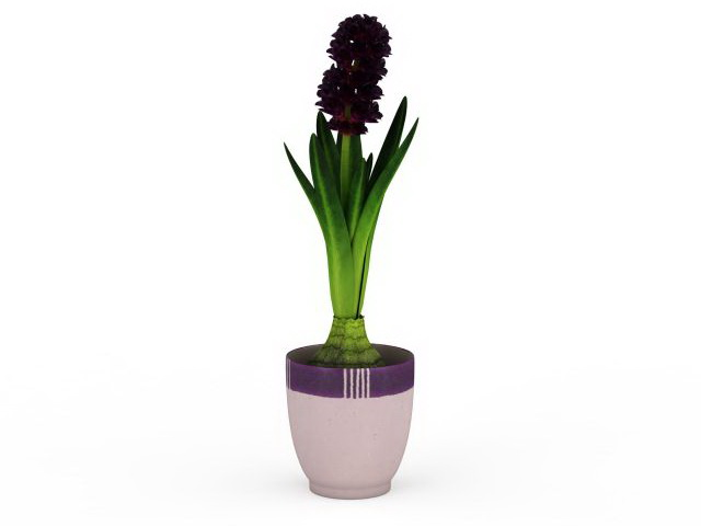 Potted hyacinth plant 3d rendering