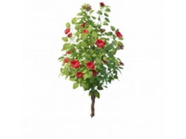 Hibiscus tree for landscaping 3d model preview
