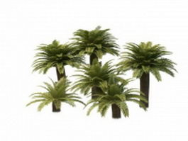 Chinese windmill palm tree 3d model preview