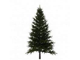 Spruce fir tree 3d model preview