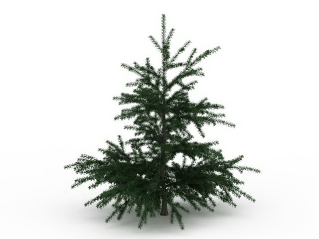Fir Christmas tree 3d rendering