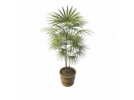 Potted fan palms 3d preview