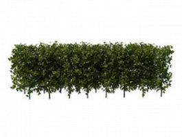 Boxwood hedge plants 3d preview