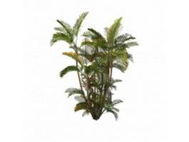 Areca palm plant 3d preview