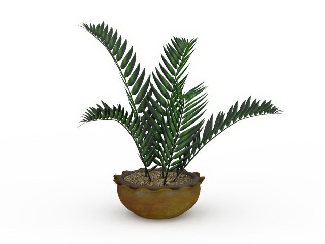 House ferns plants 3d rendering