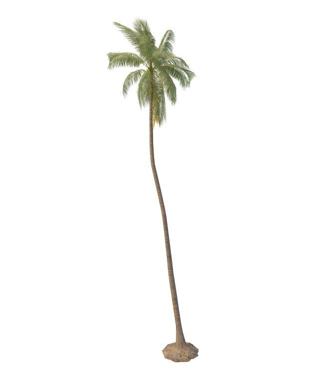 Tall palm tree 3d rendering