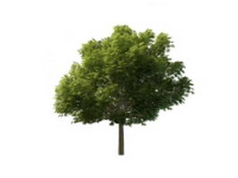 Sycamore tree 3d model preview