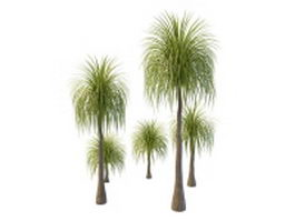 Queen palm trees 3d model preview
