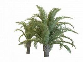 Dwarf phoenix palm trees 3d model preview
