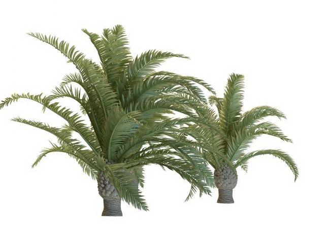 Dwarf phoenix palm trees 3d rendering