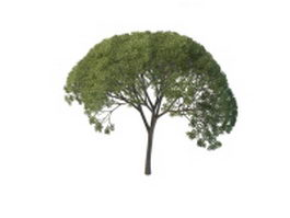 Willow tree 3d model preview