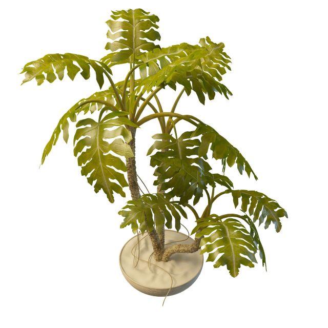 Monstera deliciosa plant 3d rendering