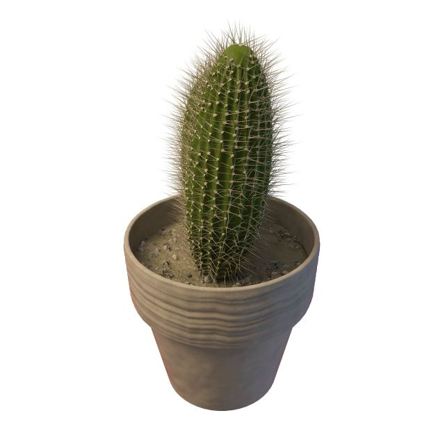 Potted Saguaro Cactus 3d Model 3ds Max Files Free Download