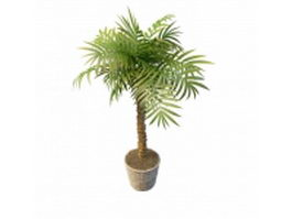 Indoor potted trees 3d preview