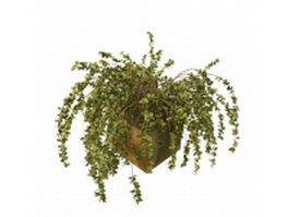 Potted evergreen shrubs 3d preview