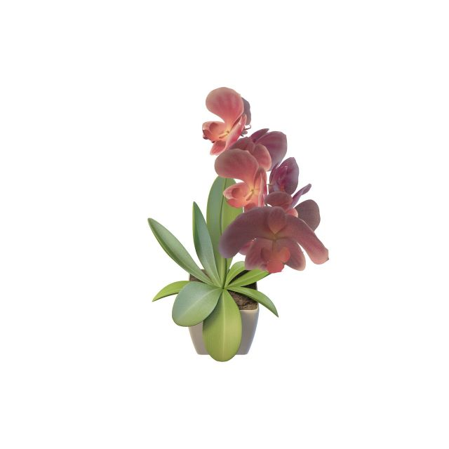 Potted flowers 3d rendering