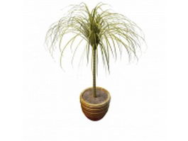 Ponytail bottle palm 3d preview