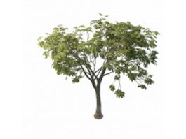 Chestnut tree 3d preview