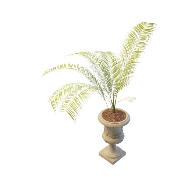 Potted live palm tree 3d rendering