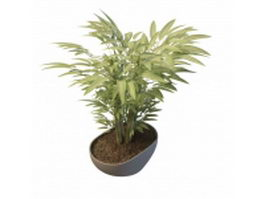Potted bamboo plants 3d preview