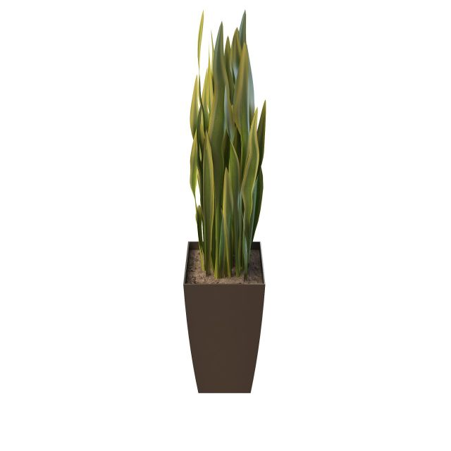 Variegated yucca plant 3d rendering