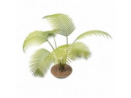 Potted palm tree plants 3d preview