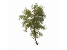 Lime tree plant 3d model preview