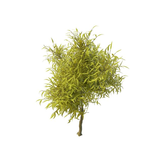 Young willow tree 3d rendering