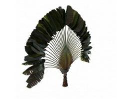 Ravenala palm 3d model preview
