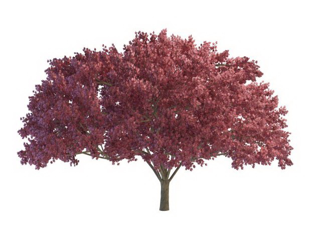 Purple blooming tree 3d rendering