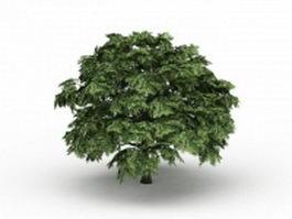 Field maple tree 3d model preview