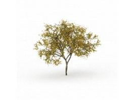Fraxinus Pennsylvanica tree 3d model preview