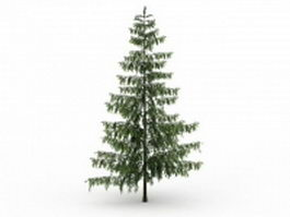 Pinus Monticola tree 3d preview
