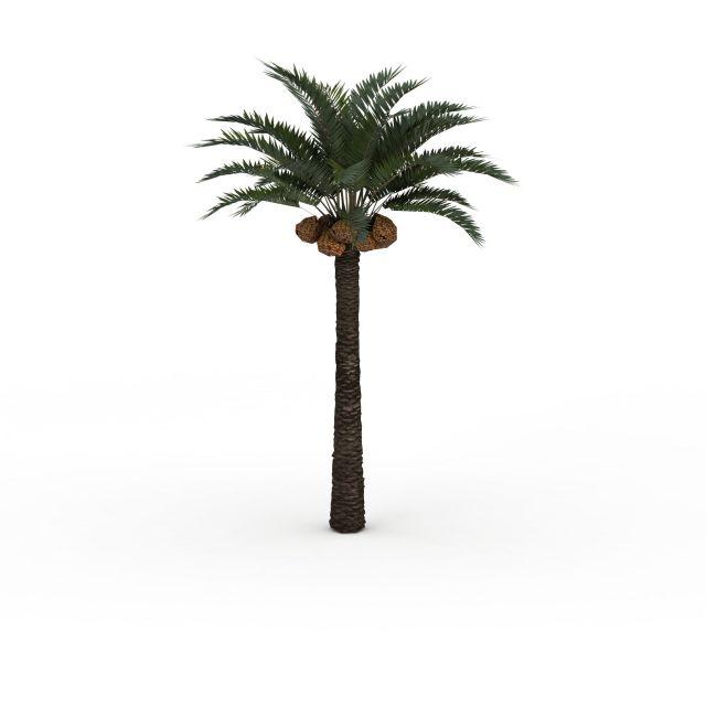 Date palm tree 3d rendering